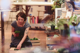 Female worker arranging plants in crate at garden centerの写真素材 [FYI03709959]