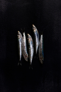 Overhead view of gray fish on black textured surfaceの写真素材 [FYI03714076]
