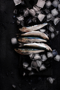 Overhead view of fish with ice cubes on black textured surfaceの写真素材 [FYI03714082]