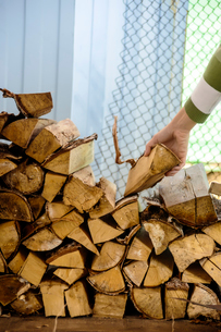 Cropped image of woman picking chopped firewoodの写真素材 [FYI03714177]