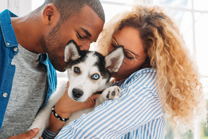 Multi-ethnic couple kissing Siberian Husky at homeの写真素材 [FYI03714272]