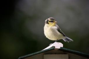 Bird perching on birdhouseの写真素材 [FYI03714924]