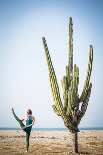Rear view of woman doing bird of paradise yoga while standing by cactus at beach against clear skyの写真素材 [FYI03715542]