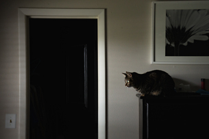 Side view of cat sitting on sideboard at homeの写真素材 [FYI03716170]