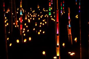竹林の小径ライトアップ(小机城址市民の森)の写真素材 [FYI03718566]