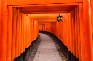 View of Torii gates at Fushimi Inari Shrineの写真素材 [FYI03719576]