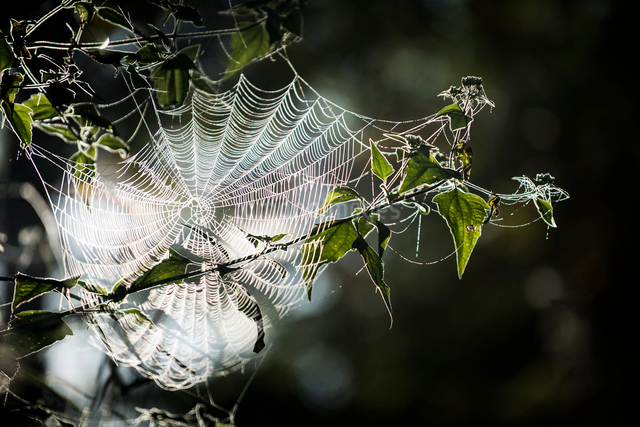 Close-up of spider web on plantの写真素材 [FYI03720153]
