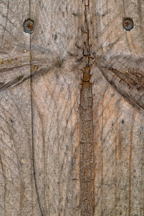 Close-up of textured wooden plankの写真素材 [FYI03720232]