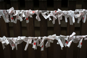 Close-up of fortune papers on rope at Hikawa shrineの写真素材 [FYI03720390]