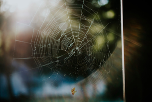 Close-up of damaged spider web on sunny dayの写真素材 [FYI03720668]