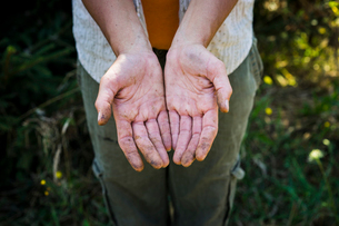 High angle view of beekeeper showing dirty hands while standing on fieldの写真素材 [FYI03721297]