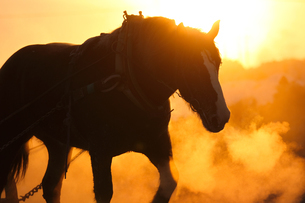 冬の馬の写真素材 [FYI03722097]