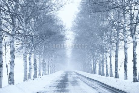 冬の並木道の写真素材 [FYI03722163]