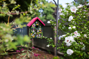 Painted birdhouse hanging in yard amidst plantsの写真素材 [FYI03722863]