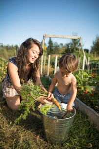 Mother and shirtless son putting carrot in bucket at community gardenの写真素材 [FYI03723170]