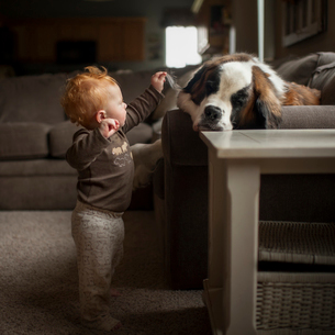 Full length of curious baby boy touching dog's ear while standing at homeの写真素材 [FYI03724044]