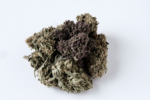 Close-up of dry cannabis plant on white backgroundの写真素材 [FYI03724282]