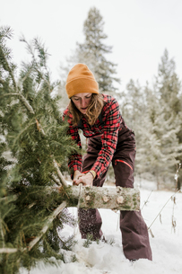 Woman cutting pine tree in forest during winterの写真素材 [FYI03725144]