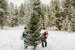 Parents with daughter standing by pine tree in forest during winterの写真素材 [FYI03725148]