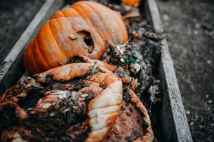 High angle view of waste pumpkins in troughの写真素材 [FYI03727962]
