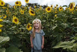 Cheerful girl standing amidst sunflowers at farmの写真素材 [FYI03728367]