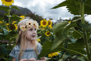 Close-up of girl looking away while standing amidst sunflowersの写真素材 [FYI03728379]