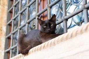 ドブロブニク旧市街の窓で寝そべる黒猫の写真素材 [FYI03730932]