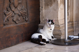 世界遺産ドブロブニク旧市街の黒白ネコの写真素材 [FYI03731048]