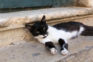 ドブロブニクの階段で寝転ぶ黒白ネコの写真素材 [FYI03731089]