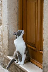 ドブロブニク旧市街、ドアが気になるグレーのネコの写真素材 [FYI03731156]