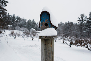 Snow covered birdhouse against sky in forestの写真素材 [FYI03731249]