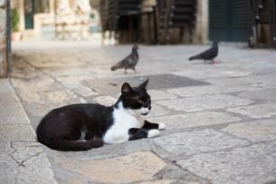 ドブロブニク旧市街、黒白のネコと鳩の写真素材 [FYI03731290]