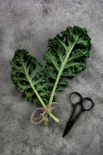 High angle view of leaf vegetable with scissor on tableの写真素材 [FYI03731292]