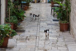 ドブロブニクを歩く二匹の黒白猫の写真素材 [FYI03731457]