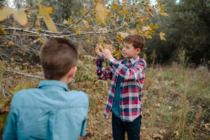 Boys standing by tree on field at park during autumnの写真素材 [FYI03731697]