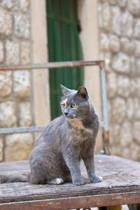 ドブロブニク、台車に乗るグレーの猫の写真素材 [FYI03731743]