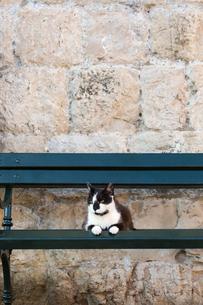 ドブロブニクのベンチに佇む黒白ネコの写真素材 [FYI03731918]