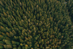 Aerial view of trees growing at Reunion islandの写真素材 [FYI03732323]