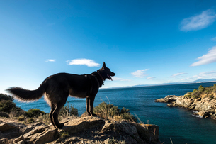 Side view of dog standing on rocks at beach against sea and skyの写真素材 [FYI03733001]
