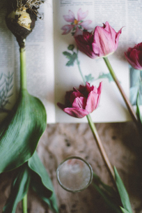 Overhead view of tulips and plant bulbs on bookの写真素材 [FYI03733264]