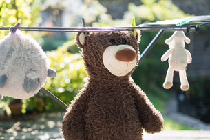 Close-up of stuffed toys hanging on clotheslineの写真素材 [FYI03733616]