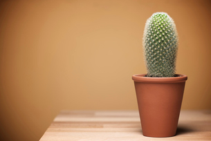 Potted cactus on wooden table against beige backgroundの写真素材 [FYI03734808]