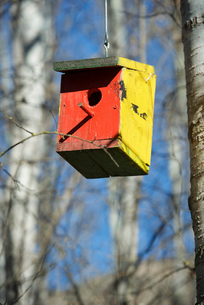 Low angle view of birdhouse hanging on tree against sky in forestの写真素材 [FYI03734826]