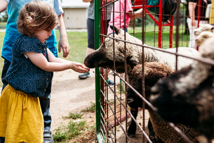 Sister feeding sheep through fence while standing by brother at zooの写真素材 [FYI03737047]