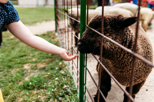 Cropped hand of girl feeding sheep through fence at zooの写真素材 [FYI03737051]