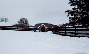 Kennel by fence at farm against clear sky during winterの写真素材 [FYI03737273]