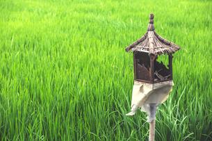 High angle view of broken birdhouse at farmの写真素材 [FYI03737867]