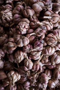 Overhead view of garlic bulbs for sale at marketの写真素材 [FYI03737894]