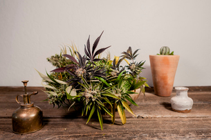 Close-up of potted cannabis plant on wooden table against wallの写真素材 [FYI03739681]