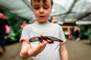 Curious boy holding butterflyの写真素材 [FYI03741541]